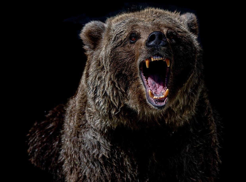 Best Bear Spray of 2021 1