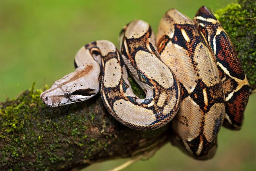 Snake Identification - Learn all About Various Snake Bites, Venomous Snakes & More for Urgent Situations 11