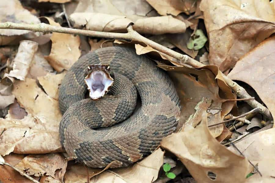 Snake Identification - Learn all About Various Snake Bites, Venomous Snakes & More for Urgent Situations 7