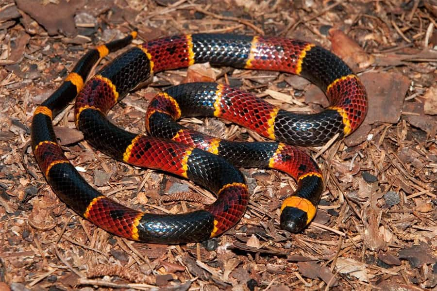 Snake Identification - Learn all About Various Snake Bites, Venomous Snakes & More for Urgent Situations 5