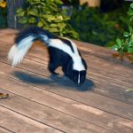 get-rid-of-skunks