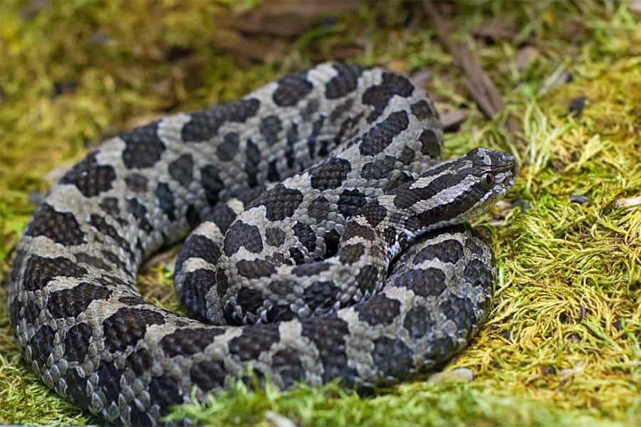 Snake Identification - Learn all About Various Snake Bites, Venomous Snakes & More for Urgent Situations 10