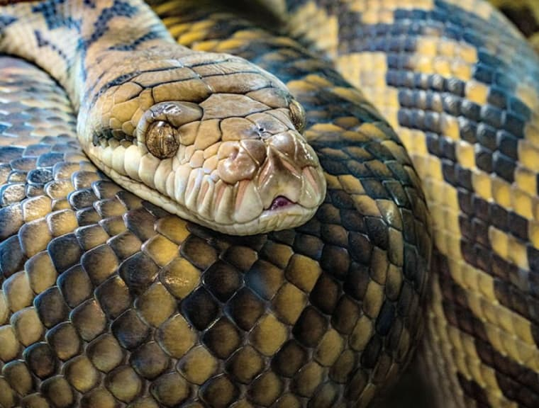 Snake Identification - Learn all About Various Snake Bites, Venomous Snakes & More for Urgent Situations 42