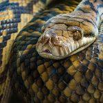 snake-identification